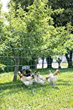 Kerbl Geflügelnetz, 112 cm Doppelspitze, ohne Strom